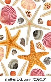 An interesting composition of starfish and seashells on a white background.