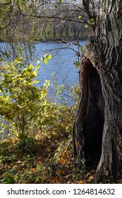 interesting hollow tree in a park,  near river