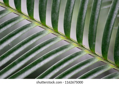 interesting leaf patterns of a palm branch