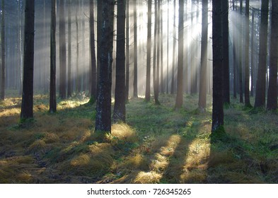 interesting lighting mood with sun rays in the forest
