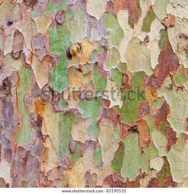 Interesting Multicolored Tree Bark Background Stock Photo Edit