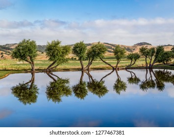 Interesting trees are reflected in a small pool in rural Marin County, California.
