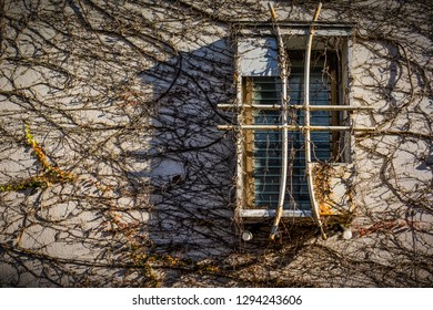 An interesting window on a street in Kamakura, Japan with a wall covered in vines.
