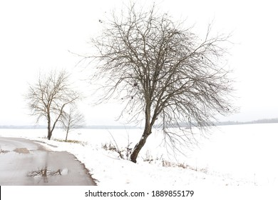 Interesting winter landscape. A dark bare spreading tree without leaves and a wet paved road with puddles. Field covered with pure white snow and overcast sky. Dreary view. Monochrome image.