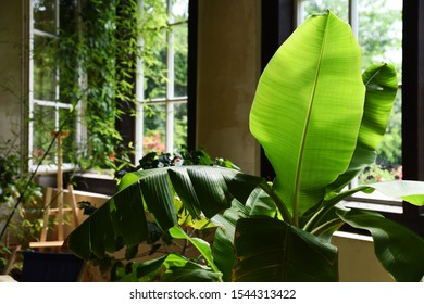 Interior of atelier studio with big window and green plant with light leaf. Bright indoor with cozy and natural design.