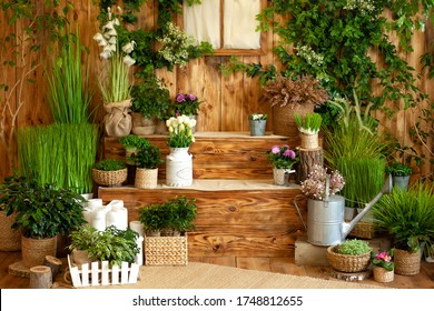 The interior of autumn yard. Patio of a wooden house with green plants in pots. Gardening on steps of house. Rustic terrace. Country house veranda in summer decoration. Easter. Growing potted plants.