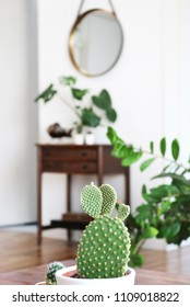 Interior of a boho style apartment with lots of plants and a cactus in the foreground