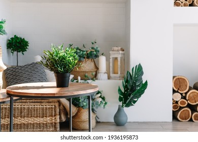 Interior of bright living room in scandinavian style with coffee table and plants.