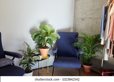 Interior of cloakroom with armchairs and flowerpots in sunlight.