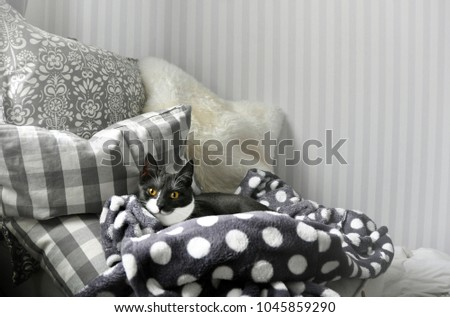 Interior Decorate Gray Color Patterns Home Stock Photo Edit Now