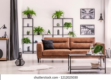 Interior design created by plant lover, different kind of plowers and plant on a black metal shelf behind big comfortable leather couch in elegant house