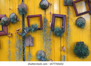 Interior design of Wooden picture frame and cut wood trunk hanging on yellow wall wood plank and Ivy root - reused or recycle decorate