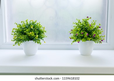 Interior green flowers grass in white pot, on white window sill