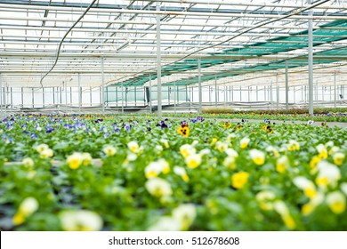 Interior of a greenhouse, full of growing flowers and plants