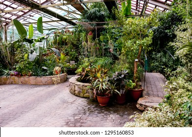 Interior of   greenhouse with plants