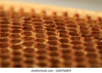 Interior of an honeycomb with colorful perga. Visible shape of the bee cell.
