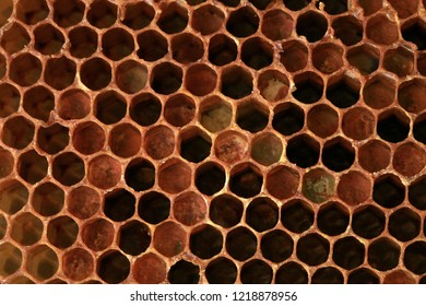 Interior of an honeycomb with colorful perga. Visible shape and bee bread of the bee cell.