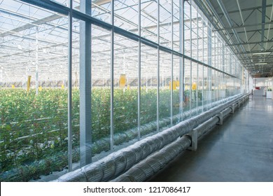interior of industrial greenhouse with glass wall and tubes, pipeline