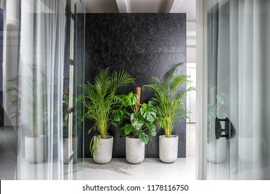 Interior in a luminous office in a loft style with gray and textured black walls. There are glass partitions with doors and curtains, green plants in the big pots. Horizontal.