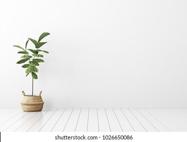 Interior mock up with green ficus tree and wicker basket in empty living room with white wall. 3D rendering.