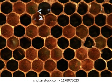 Interior of an old honeycomb with colorful perga. . Visible shape and bee bread of the bee cell.