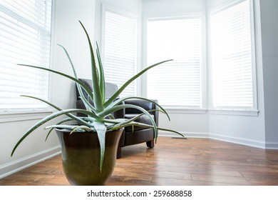 Interior room with wood laminate flooring, a large aloe plant and chair.  Sun shining in the windows.