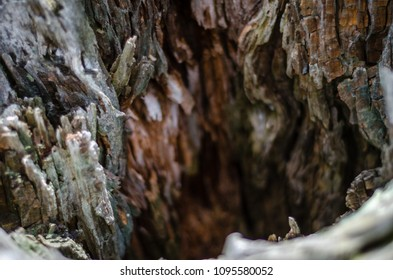 interior of a rotting tree - landscape