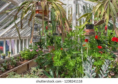 Interior of small greenhouse with plants and flowers