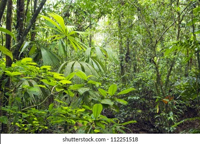 Interior of tropical rainforest in Yasuni National Park, Ecuador