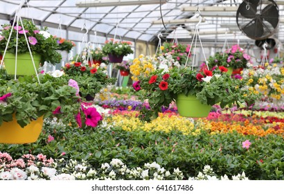 interior of a wide greenhouse with sale of plants and flowers in spring