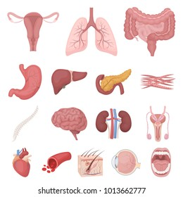 Human internal organ images stock photos vectors shutterstock internal organs of a human cartoon icons in set collection for design anatomy and medicine ccuart Choice Image