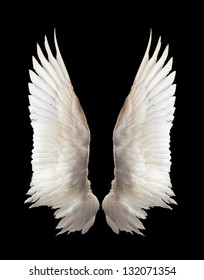 Internal white wing plumage. Isolation. - Shutterstock ID 132071354