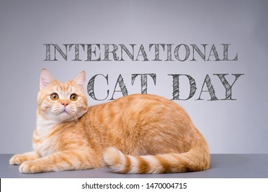 """International Cat Day poster. Portrait of a beautiful cat with the """"International Cat Day"""" text on grey background."""