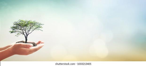 Konzept des Welttages: Menschliche Hände, die einen großen Baum halten, grüner Waldhintergrund