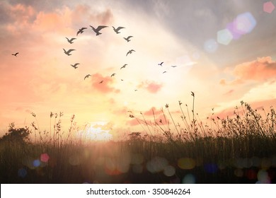International day for tolerance concept: Silhouette birds flying in shape of heart on meadow autumn sunrise landscape background