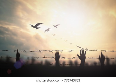 International human right day concept: Silhouette refugee hands raising and barbed wire on sunset background.