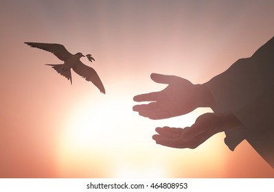 International human rights day concept: Silhouette Jesus Christ hands and bird flying over sunset background