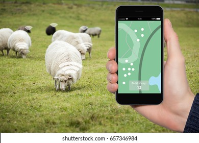 Internet of things in husbandry. Sheep tracking monitoring in smart farm