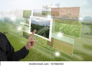 Internet of things(agriculture concept),smart farming,industrial agriculture.Farmer point hand to use augmented reality technology to control ,monitor and management in the farm