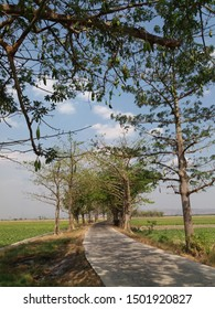 inter-regional road access. Road infrastructure in villages in Indonesia and Asia. Trees as roadside protectors. The scenery in the village