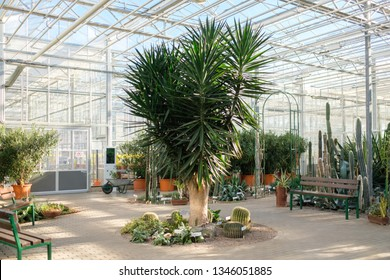 Interrior of a botanical greenhouse.