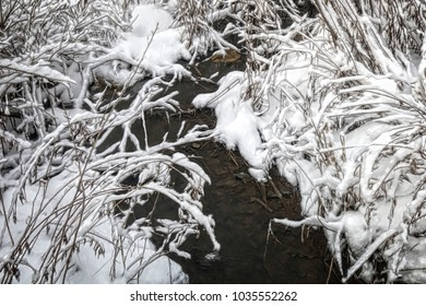An intimate winter view of fresh snow in a marsh.