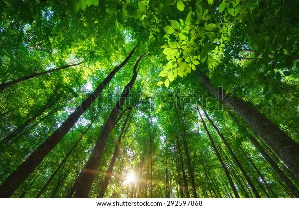In den Wald. Naturzusammensetzung.