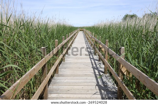 Into the Reed. Pathway to the wilderness among reed plants on wooden bridge.