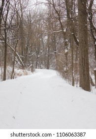 Into the Snowing Woods--Trail