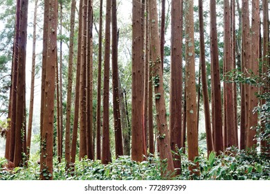 Into the woods. Florest trees