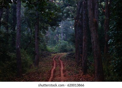 Into The Woods Of Kanha. Kanha National Park, Madhya Pradesh, India. Tiger Reserve. One of the beautiful Jungle