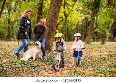 Introducing cute dog to a lovely preschool girl