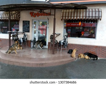 The invasion of stray dogs. A lot of dogs at the entrance to the coffee shop. Ukraine, Dnepropetrovsk. May 2016.