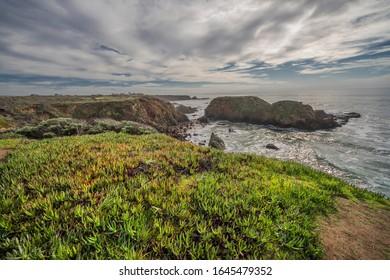 Invasive, Non-Native oceanside vegetation called Ice Plant.